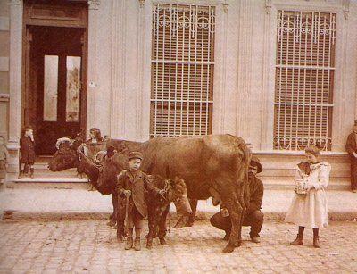 Leche ordeñada en la puerta de la casa. Hasta fines de los 40 a éste proveedor se lo vió por barrios de la Capital y Gran Buenos Aires.