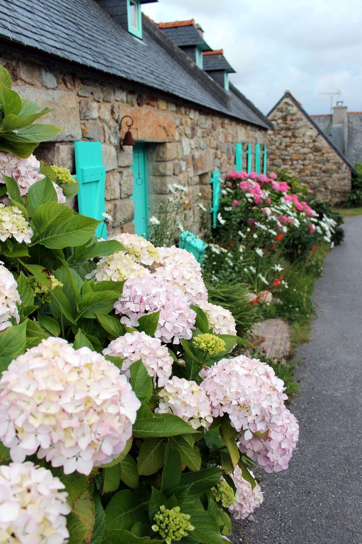 Maison traditionnelle ~ Crozon, Finistere. Une autre fleur que j'adore, les hortensias... Elles trouveront je pense leur place dans l'espace récemment défrichée chez toi...😉
