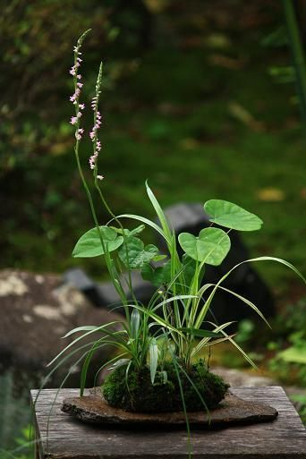 Kokedama: Japanese moss plants  Beautiful balance of nature and modern design.