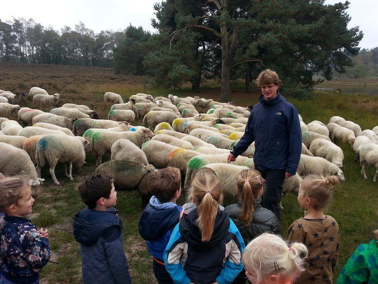 Maatschappelijke organisatie: Op bezoek bij schaapherder Wouter Bos in de Overasseltse en Hatertse vennen.