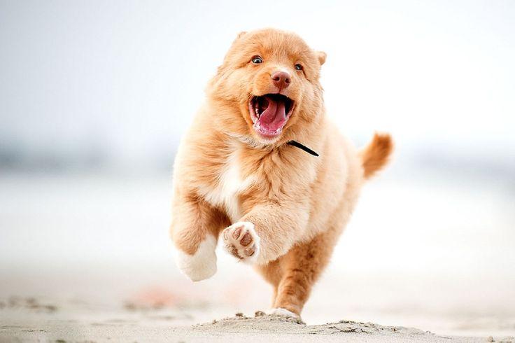 собака бежит: 21 тыс изображений найдено в Яндекс.Картинках