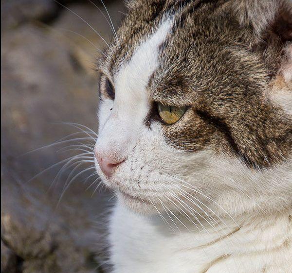 00885-20032016-trifolium gatos cristal