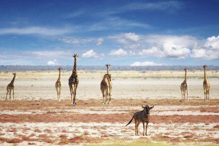 Namibia Safari im August
