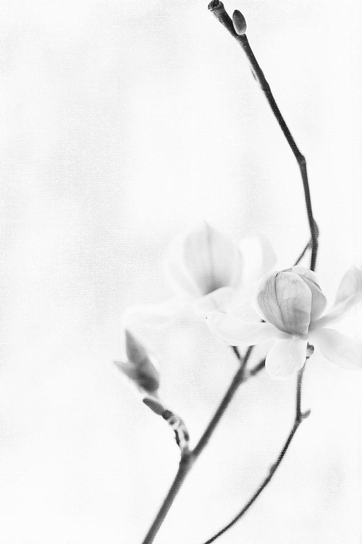 90 best black and white photos images on pinterest black