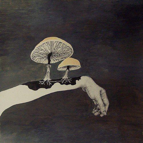 Pertenecientes del dominio Eukarya y del reino Fungi, estos llamados hongos son seres multicelulares, se alimentan de materia organica y no realizan proceso de fotosintesis como muchos creen.  *Dato curioso: Son fundamentales en los ecosistemas ya que ayudan a limpiar cuando aparecen organismos en descomposicion. Algunos de ellos son consumidos como alimento por los humanos, otros resultan ser venenosos, toxicos o alucinogenos.