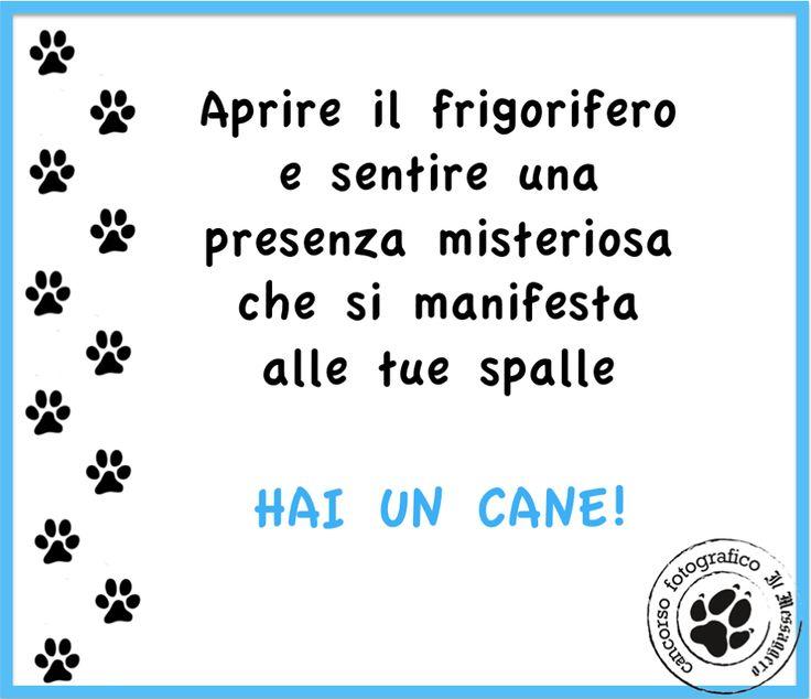 Hai un cane se... www.cancorso.it cancorso2013, cancorso, cani, cane, concorso, concorsi, contest, ilmessaggero, quotidiano, animali, storie, canstorie, coppie, cancoppie, citazioni, aforismi, curiosità