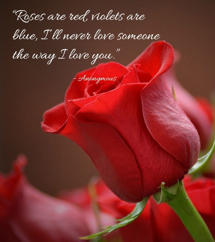 Romantic Rose Quotes 20 Best Rose Love Quotes With Images Rose Flower Wallpaper In 2020 Rose Flower Wallpaper Flower Close Up Beautiful Red Roses