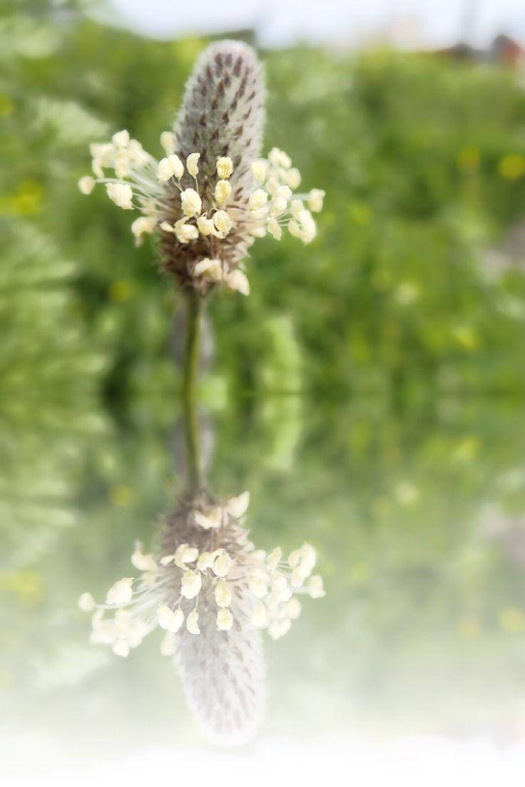 Odori di primavera