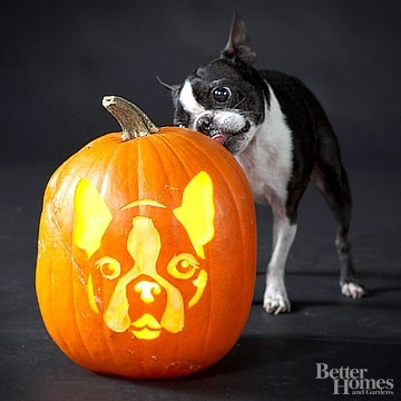 Will have to carve this one for Halloween!!Halloween Projects, Terriers Boston, Halloween Pumpkins, Pumpkin Carvings, Jack O' Lanterns, Boston Terriers Halloween, Inspector Terriers, Pumpkin Design, Happy Halloween