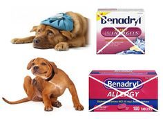 Benadryl for #Dogs - Why I DON'T recommend using Benadryl... Benadryl Allergy Ultra Tab, or Benadryl LiquiGels are synthetic-chemical drugs. Many veterinarians recommend one of the two products for dogs suffering from symptoms of allergies, swelling from insect stings, or spider bites, etc. If you are on social media, you will see dog owners recommending Benadryl to other dog owners. So what's my issue with Benadryl?...