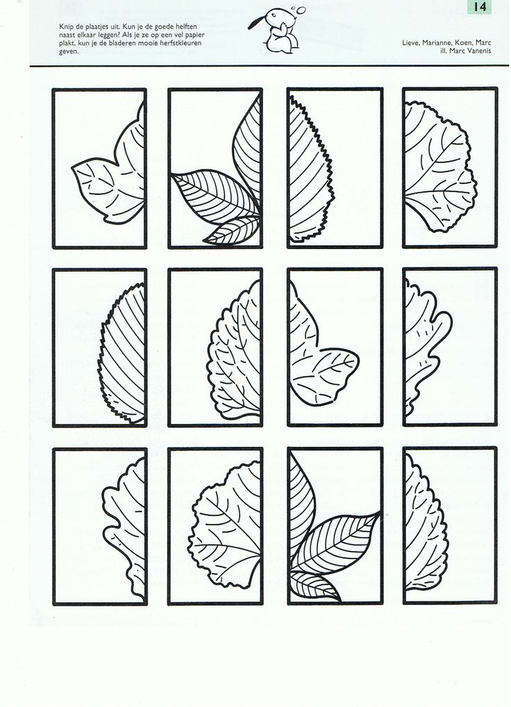 Cut and match these leaves - great symmetry activity!