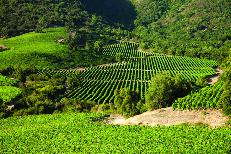Colchagua Valley - Chilean vineyars, viñedos de Chile http://wines4fun.com/es/59-chile#/007_d_origen-colchagua_valley/precio-4-114