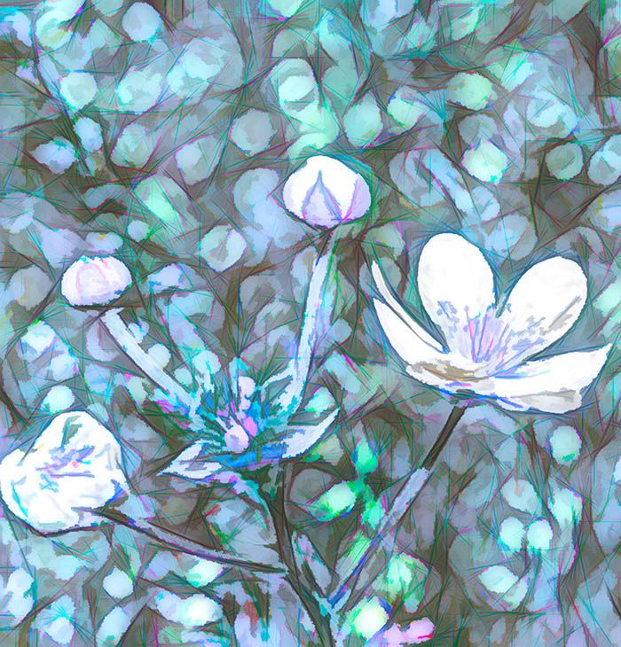 Abstract Flowers Sketch by Tim Abeln Photography and Digital Art Prints. Beautiful wall decoration for your home and office. Flowers in a field digital art sketch based on a photograph. #flower #flowers #digitalart #wallart #art #homedecor #decoation #sketch #blue