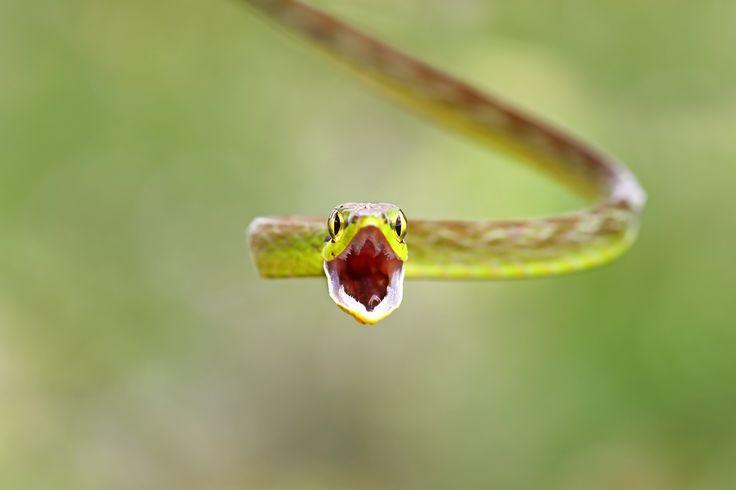 96 best Reptilien  Amphibien images on Pinterest