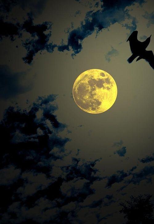 Full Moon ♔♔