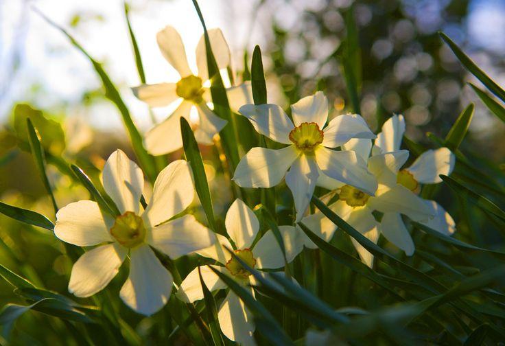 """Пред нас е цял един прекрасен слънчев априлски ден :) Бъдете усмихнати, мислете позитивно и се радвайте на успехи днес! www.chetinyan.com """"След като не можем да променим действителността, нека да променим очите, с които я гледаме."""" Никос Казандзакис"""