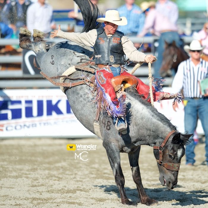 17 Best Images About Rodeo On Pinterest Utah Cattle And