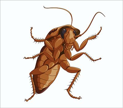 Cockroach Facts Beyond Belief - http://apolloxpestcontrol.com/cockroach-facts-beyond-belief/