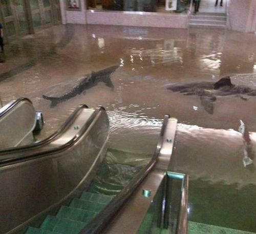 Did someone figure out how to pin screen shots of my nightmares?  says this was from a shark tank collapse at an aquarium in Kuwait.: Picture, Shopping Mall, Stuff, Funny, Sharks, Photo, Shark Tank, Tanks