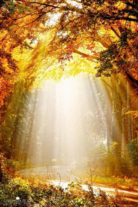 Sometimes the world is just full of enchantment and abundant light...bask in it [another pinner]...well said! [me] :o): Lights, Sun Ray, Autumn, Fall, Beautiful, Trees, Sunray, Sunlight, Heavens