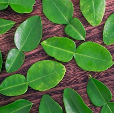 Kaffir Lime Leaves Everything You Need to Know: Kaffir Lime Leaves