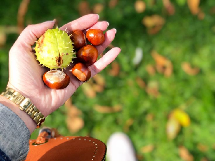 September sunshine, Autumn fashion & Conker hunting #LittleLoves