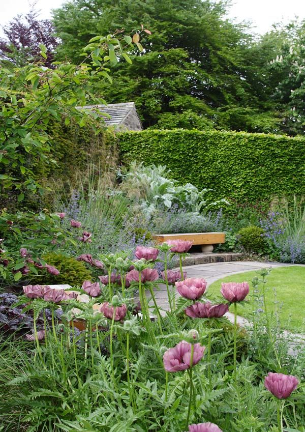 Papaver orientale 'Patty's Plum' in Sybil's Garden, late May