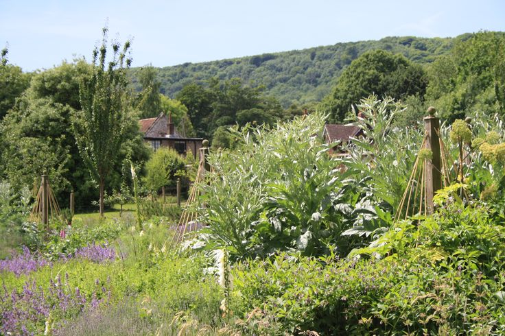 Kitchen Garden June 2015. Wiston House chefs are using: mint, rosemary, chives, basil,  parsley, broccoli, rhubarb, rocket and artichokes for the lovely staff and guests. Sussex