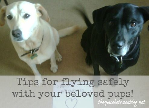 Great tips for air travel with a large dog...or 2.