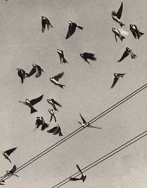 Martin Martincek, Swallows, 1960-1963