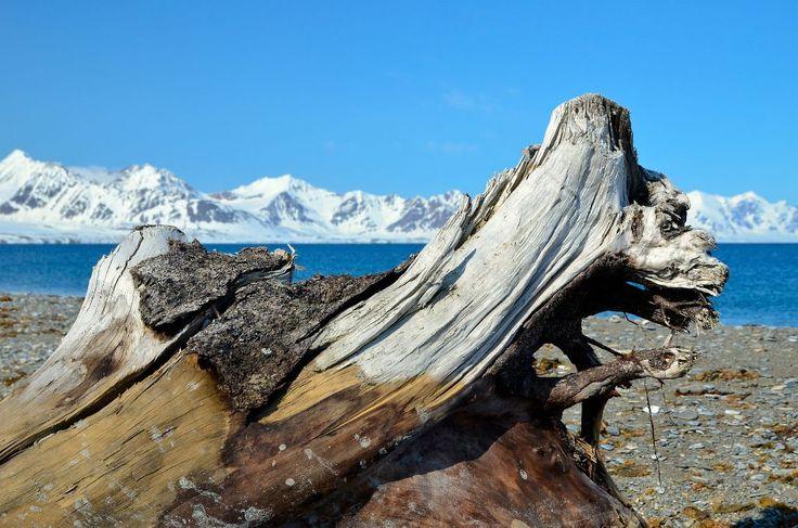 DSC0176 Spitsbergen Prins Karls Forland Poolepynten drijfhout 120611.jpg - Spitsbergen - Prins Karls Forland is een smalgerekt eiland voor d...