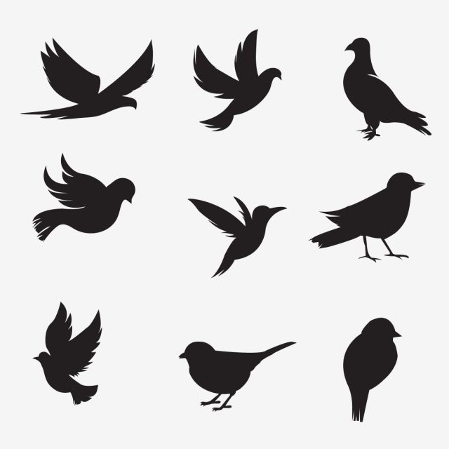 Bird Silhouette Collection Bird Silhouette Bunny Png And Vector With Transparent Background For Free Download Bird Silhouette Silhouette Art Silhouette Painting