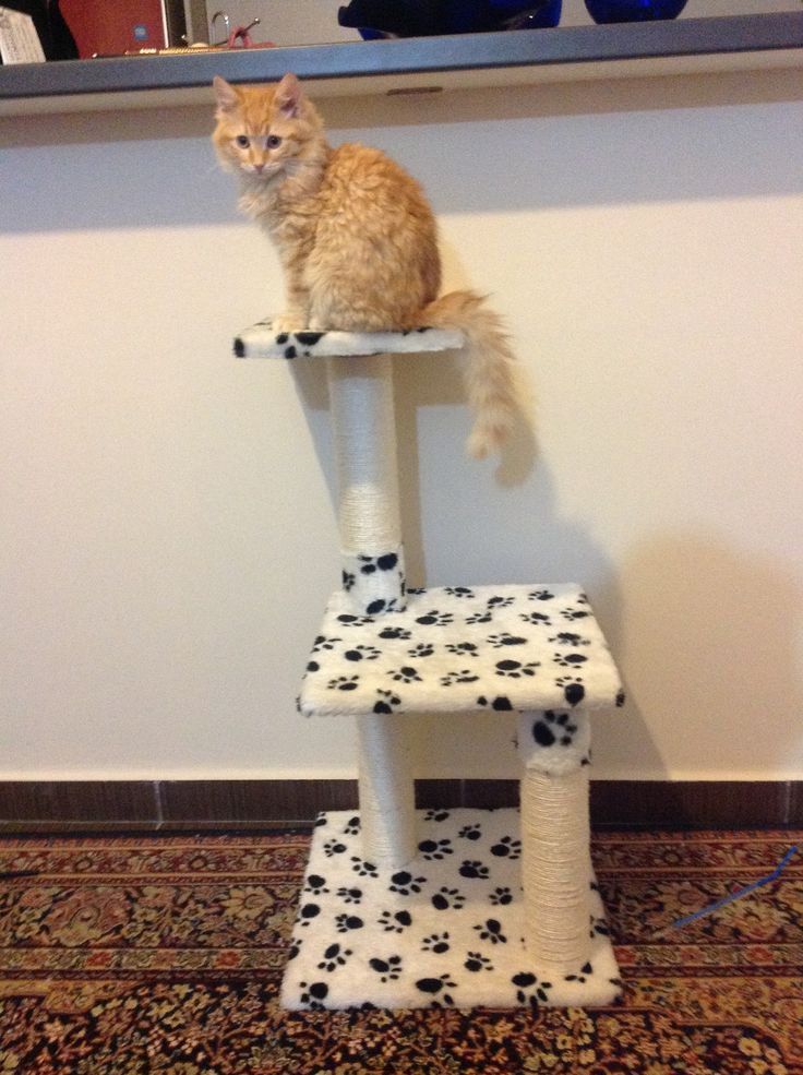 Cat. Foxy