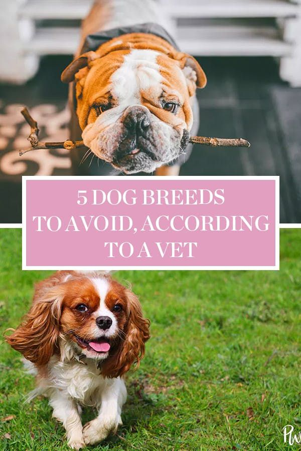 5 Popular Dog Breeds To Think Twice About According To A Vet With Images Popular Dog Breeds Family Dogs Breeds Dog Breeds