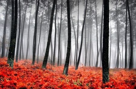 Awesome #taking #nature #trees #fog #leaves #gray #orange