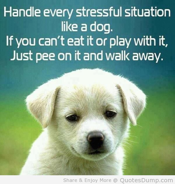 Handle every stressful situation like a dog. If you can't eat it or play with it, Just pee on it and walk away. LOL :)