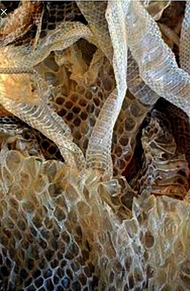 Peau de serpent Snake skin