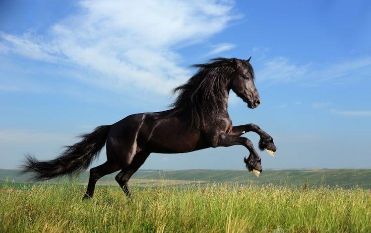 Gambar-Kuda-Liar.jpg (750×472)