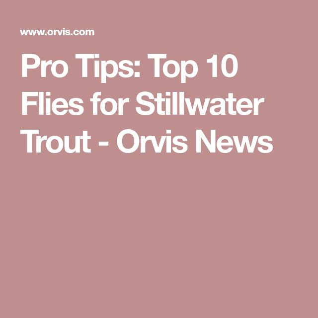 Pro Tips: Top 10 Flies for Stillwater Trout - Orvis News