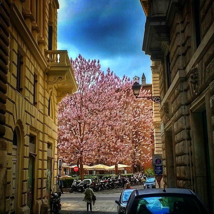 E quando você vai trabalhar e vira a esquina e uauuuu!!!??? . A primavera parece que pula na tua frente dizendo: cheguei!!!!!! huhuuuuu!!!  . Lembre-se que nós fazemos o seu roteiro personalizado em Roma organizamos o seu transfer do/para o aeroporto e também sua hospedagem! info@emroma.com . Veja mais no Snapchat Em_Roma #Roma #europe #instatravel #eurotrip #italia #italy #rome #trip #travelling #snapchat #emroma #viagem #dicas #ferias #dicasdeviagem #brasileirospelomundo #viajandopelomundo…
