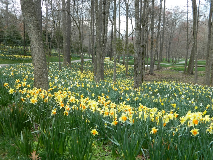 25 Best Images About Botanical Gardens On Pinterest Gardens New York And Cleveland