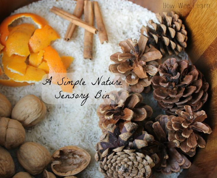 """Nature based sensory bin... base of white rice with pine cones, orange peel, cinnamon sticks & walnuts - from How Wee Learn ("""",)"""