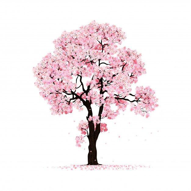 Blossoming Pink Sakura Tree Isolated Cherry Blossom Drawing Tree Drawing Simple Cherry Blossom Art