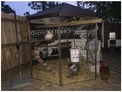 Large Dog Enclosures Outdoors