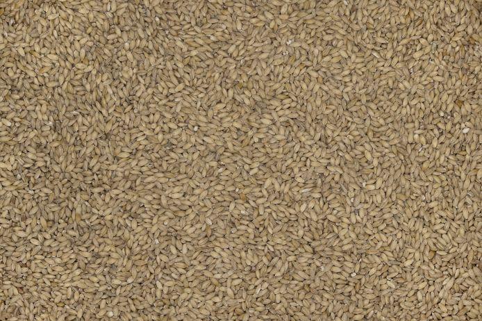 Текстуры высокого разрешения - Продукты Питания - Текстура - перловка, перловая крупа фото