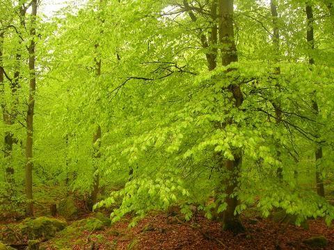 las, borelioza, kleszcz, Małopolskie Centrum Hipertermii