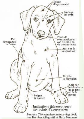 Point de massage et énergétique chien
