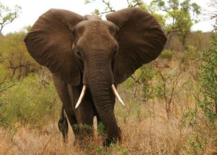 Check out GFT trip to Africa, and go on a safari home to approximately 40,000 elephants
