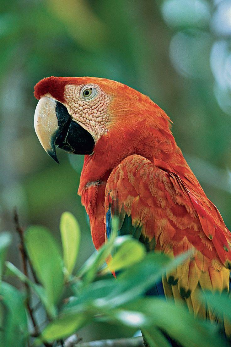 "Discover the Peruvian #Amazon and join naturalist Claudio Vidal & International Expeditions aboard the finest riverboat ""La Estrella Amazonica"""