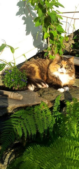 Hey...don't plant here! Can't you see I'm enjoying the evening-sun!!!